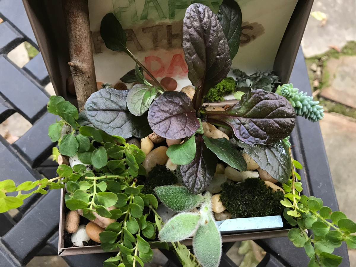 Father's Day Plant Sampler in Vintage Metal Box