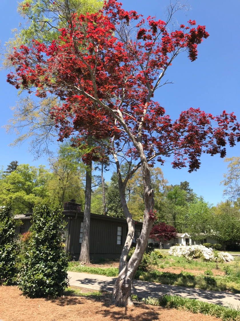 (c) Terri Robertson, T's Southern Garden, 2018