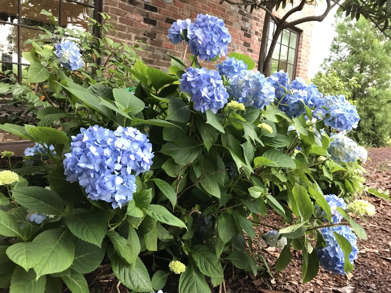 (c) Terri Robertson, T's Southern Garden Blog 2018